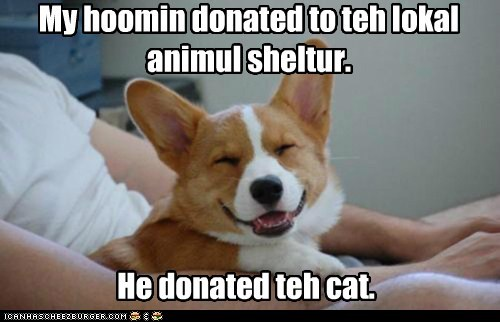animal shelter best of the week cat corgi donated donation haha Hall of Fame laugh smile smiles smiling