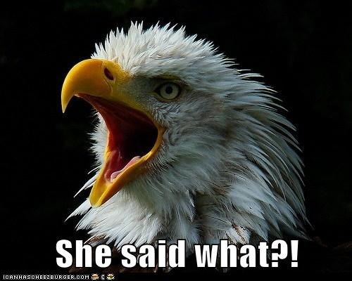 bald eagle,eagle,she said what