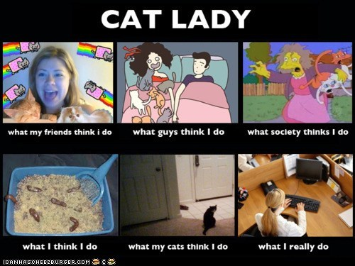 best of the week,cat lady,crazy cat lady,Memes,what I really do,what people think i do