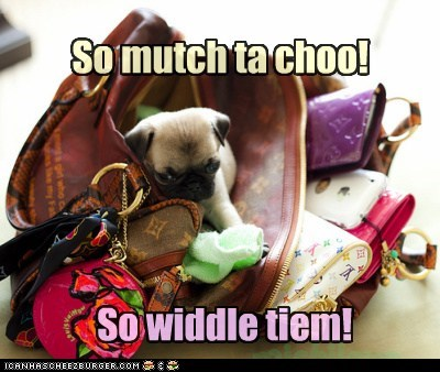best of the week,chew,chewing,Hall of Fame,pug,purse