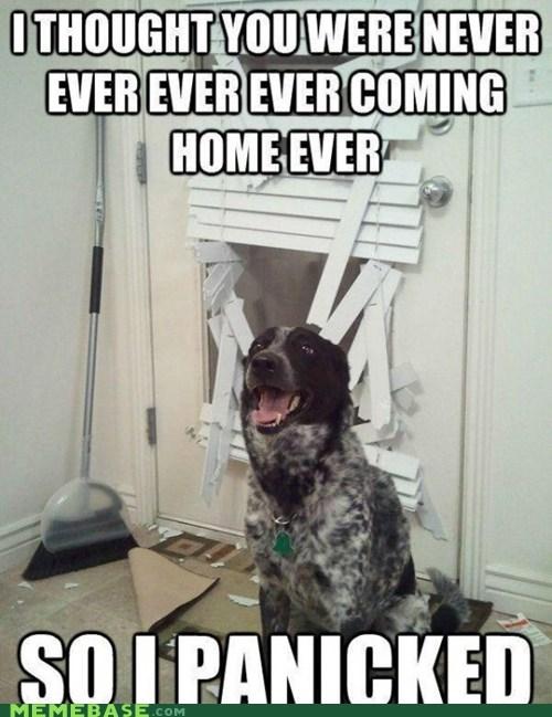 are dumb destruction dogs Memes todd sawicki hates them - 5855004160