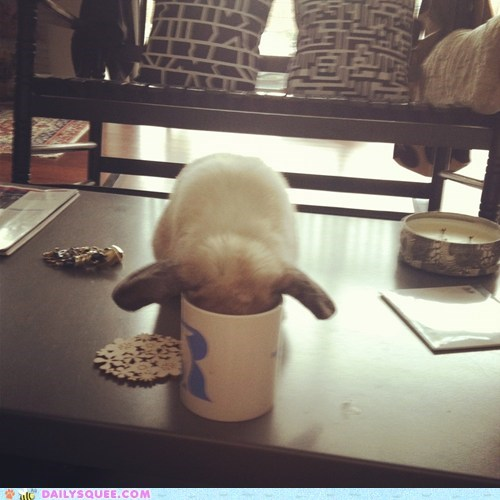 acting like animals,bunny,coffee,do not want,drinking,face down,Hall of Fame,happy bunday,monday,mug,rabbit,work