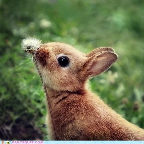 bunny dandelion gross Hall of Fame happy bunday nose friend rabbit weed - 5855349760