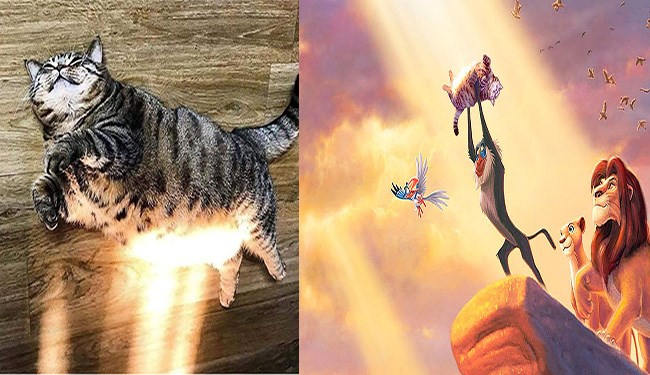 cat photoshop battle