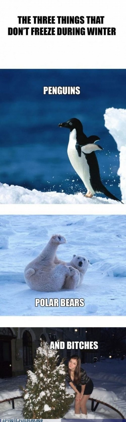 freeze ice penguins polar bear snow winter woo girls