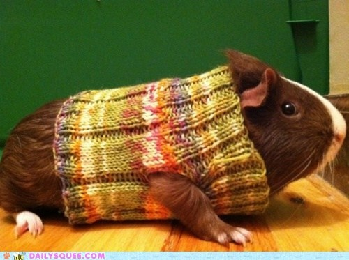 acting like animals,guinea pig,improvements,suggestion,swag,sweater