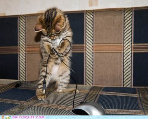 acting like animals cat caught confused cord double meaning kitten mouse playing pun - 5855696128