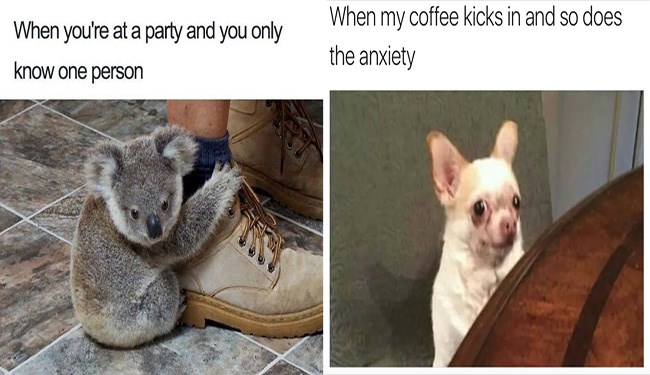 animal memes about anxiety and the problems that it brings