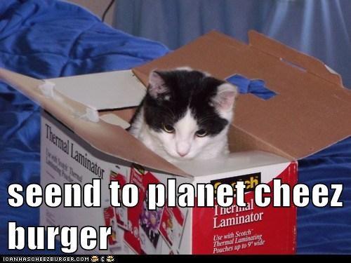 Cheezburger Image 5856343808