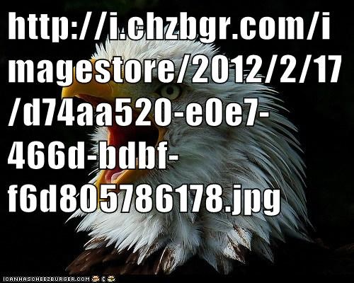 Cheezburger Image 5857128704