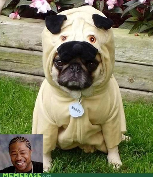 donnie darko,pug,suit,yo dawg