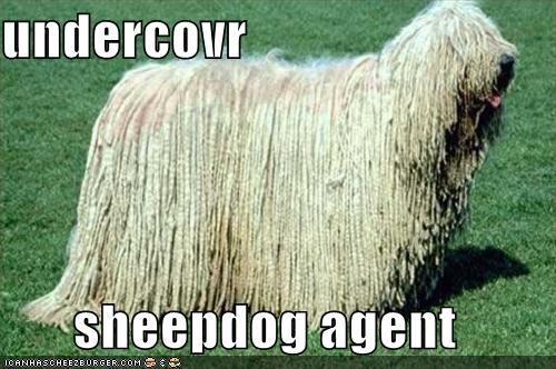 Cheezburger Image 585953024