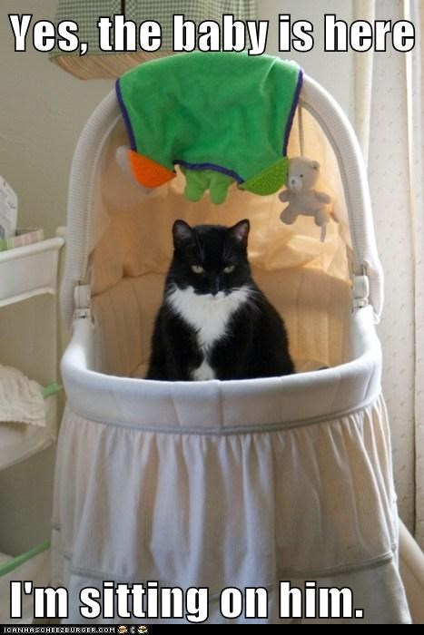 Babies baby caption Cats crib here kids sitting yes - 5860015360