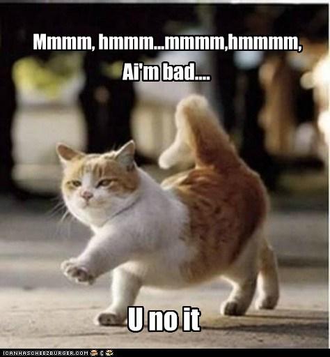 But I got cat class, and I've got cat style...