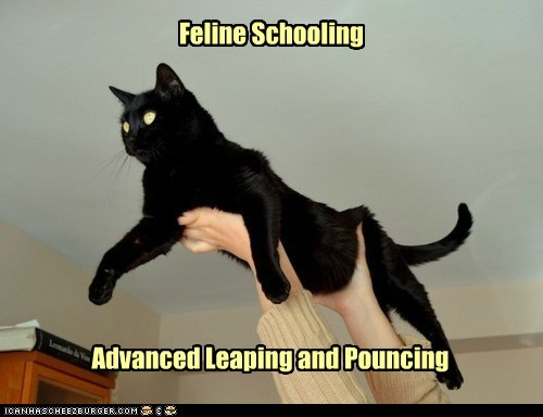 Feline Schooling Advanced Leaping and Pouncing