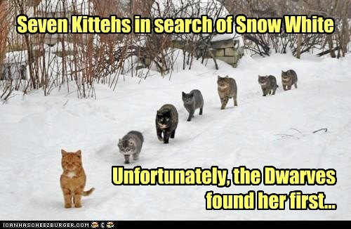 Seven Kittehs in search of Snow White Unfortunately, the Dwarves found her first...
