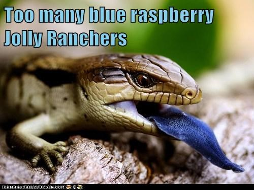 blue raspberry blue tongue candy jolly ranchers lizard reptile tongue tongue out - 5863309824
