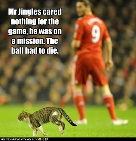 Mr Jingles cared nothing for the game, he was on a mission. The ball had to die.