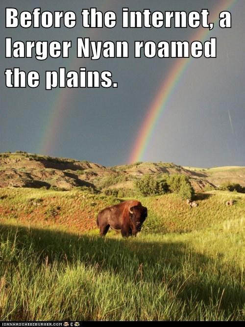 bison buffalo double rainbow nyan rainbow - 5863562496