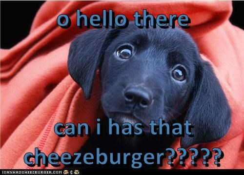 Cheezburger Image 5863646208