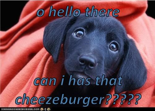 Cheezburger Image 5863654144