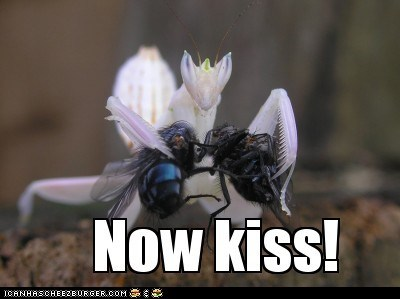 bug,bugs,flies,KISS,kisses,kissing,mantis,now kiss
