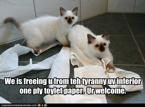 caption captioned cat Cats freedom freeing kitten one-ply purpose toilet paper tyranny - 5864457984