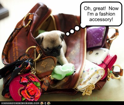 Oh, great! Now I'm a fashion accessory!