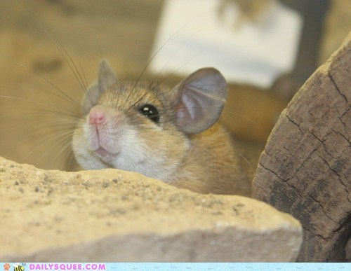 mouse rodent zoo - 5864802560