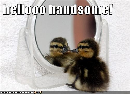 best of the week,duck,duckling,Hall of Fame,handsome,hello handsome,hey-good-lookin,mirror