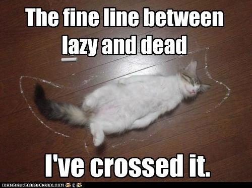 between caption captioned cat crossed dead fine kitten lazy line sleeping - 5865151744