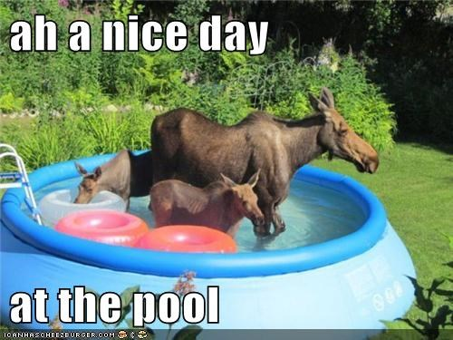cooling off,moose,pool,swim,swimming