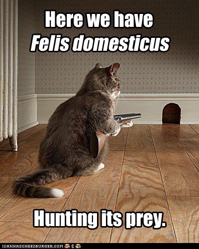 caption captioned cat domestic gun hunting prey - 5865551616