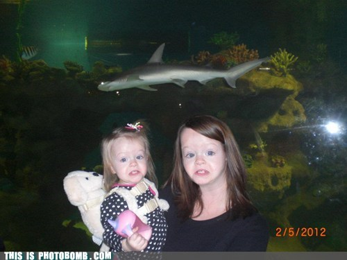 animal Awkward baby face replace shark