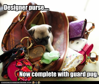 Designer purse.... Now complete with guard pug.