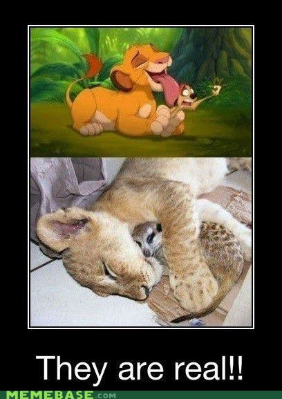 childhood,IRL,lion king,real,ruined,The Internet IRL,timon