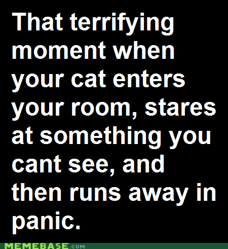 cat,ghost,invisible,panic,Text Stuffs