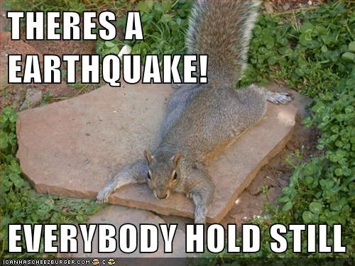 earthquake hold on natural disaster scared squirrel