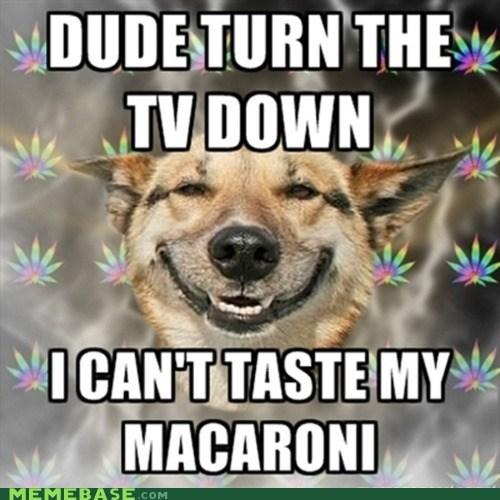 dogs macaroni Memes potent TV - 5867631872