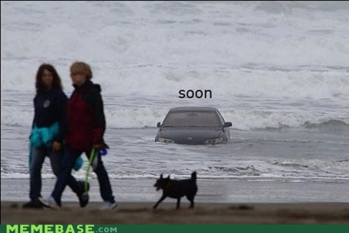 car,dogs,ocean,SOON