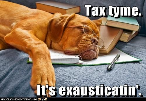 accountant glasses mastiff tax season taxes tired