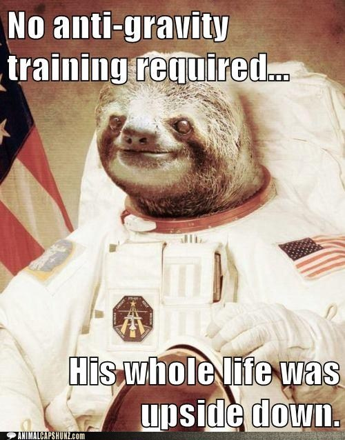 astronaut caption contest sloth space sloth - 5867973888
