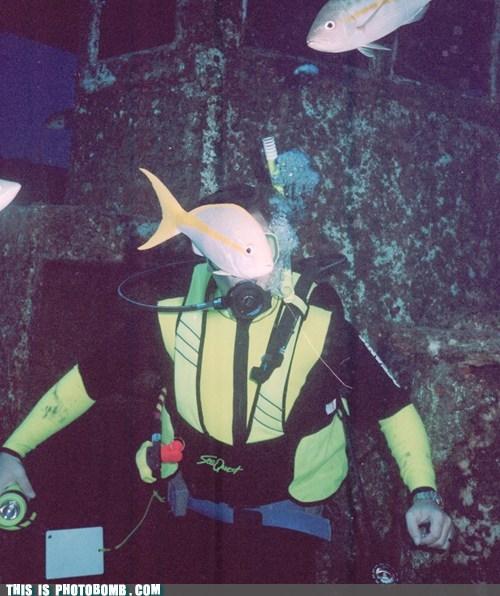 animal Animal Bomb diving fish scary - 5868025088