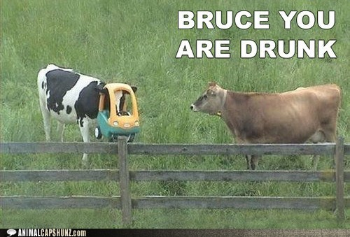 alcohol,best of the week,booze,cow,cows,drinking,drunk,Hall of Fame,tipsy,wasted,whoa
