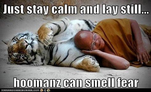 Just stay calm and lay still... hoomanz can smell fear