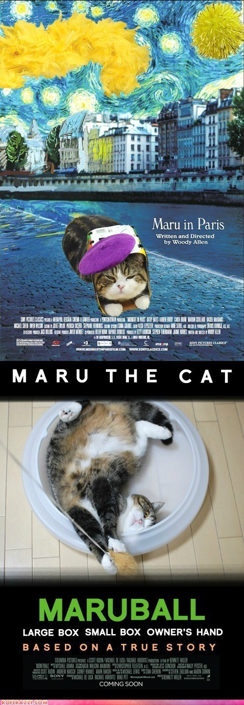 academy awards,cat,funny,maru,Movie,oscars,poster