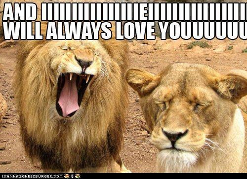 best of the week,big cats,caption,captioned,i will always love you,lions,lyrics,singing,Songs,whitney houston
