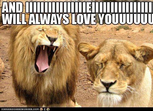 best of the week big cats caption captioned lions lyrics singing Songs whitney houston - 5868613632