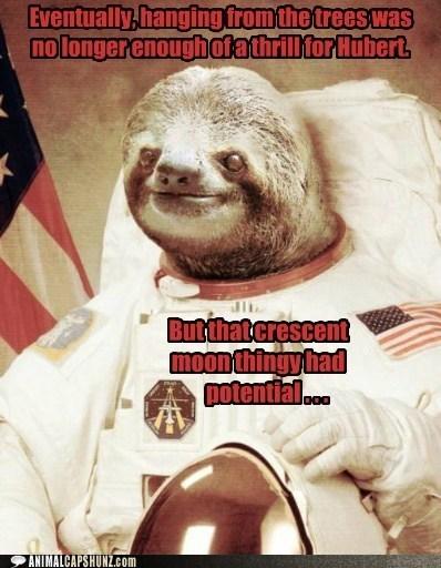 astronaut caption contest sloth space sloth - 5868753408