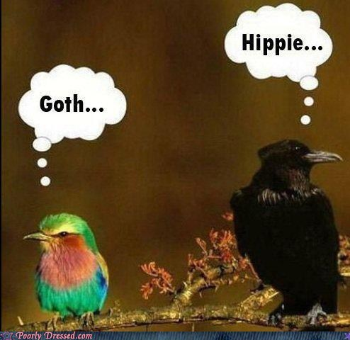 birds get along goth Hall of Fame hippie